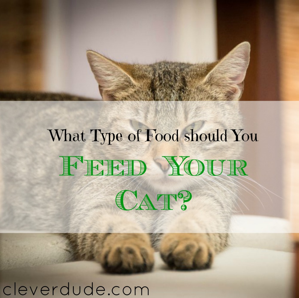 cat food tips, feeding your cat advice, giving food to your cat