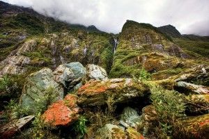 rainforest-49878_640