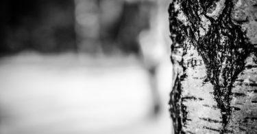 winter-260831_640